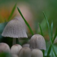 Ganz kleiner Pilz im Garten