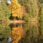 Herbstlicher Stadtwald in Lemgo