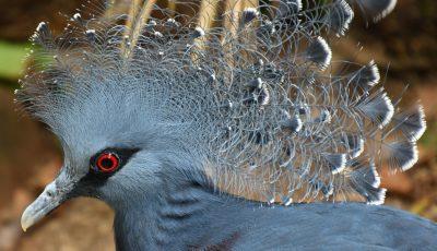 Auflug in den Vogelpark Waldsrode - Juli 2019