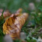 Herbstzeit – Pilzzeit